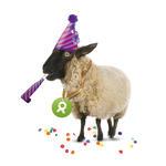 Schaf (Neujahr)
